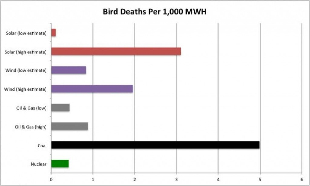 bird-deaths-per-1000mwh